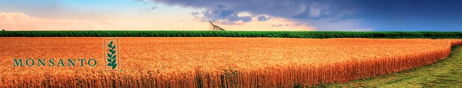 EASA Monsanto Case Study 2